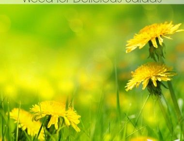 Dandelion: The Wonder Weed For Delicious Salads