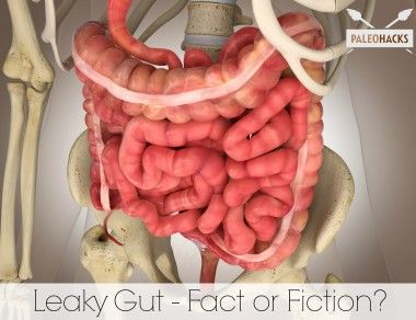 Leaky Gut: Fact Or Fiction?