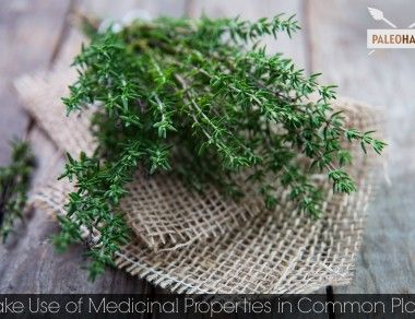 Making Use of Medicinal Properties in Common Plants