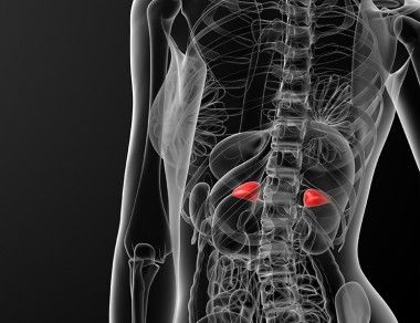 Are You Suffering From Adrenal Dysfunction?