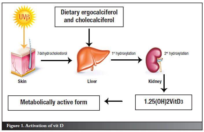 vitamin-D-metabolism-1.jpg
