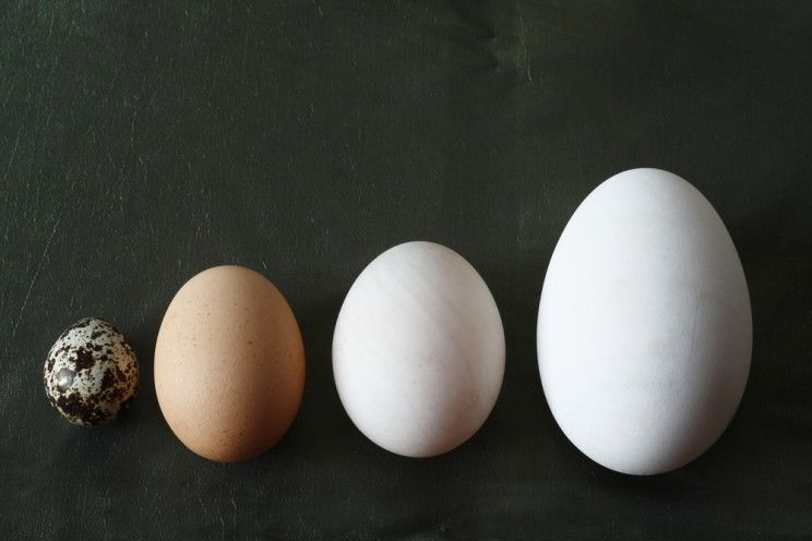 types_of_eggs-e1459068882537.jpg