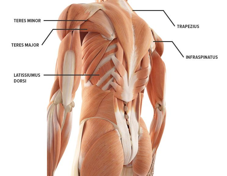how to get rid of back fat, Human Body