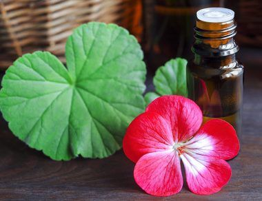 Geranium Oil: Benefits for Glowing Skin & Uses