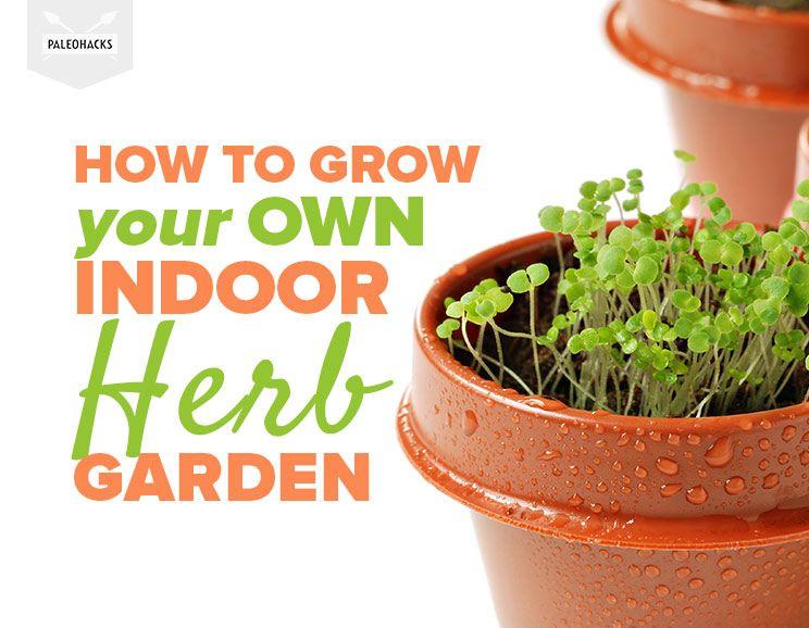 How To Grow Your Own Indoor Herb Garden