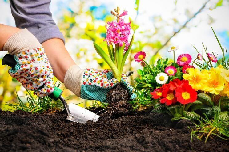 household-and-gardening.jpg