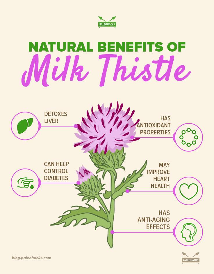Natural-Benefits-of-Milk-Thistle-infog.jpg