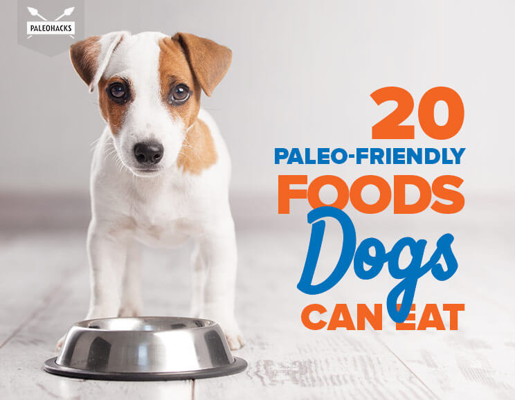20 Paleo Friendly Foods Dogs Can Eat Fruit Veggies Meat