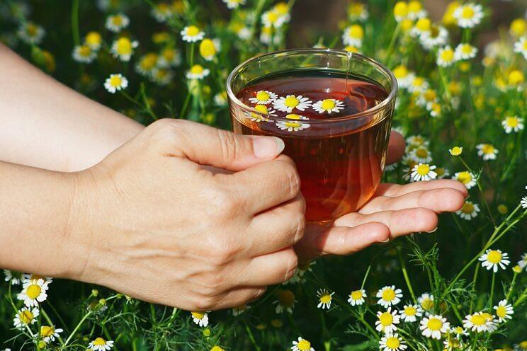 chamomile-tea-antioxidants.jpg