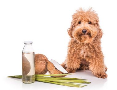 20 Amazing Ways to Use Coconut Oil for Dogs