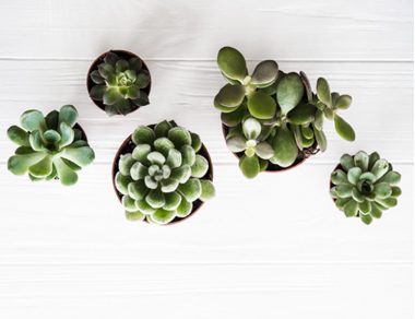 10 Ways Indoor Plants Improve Your Health and Home