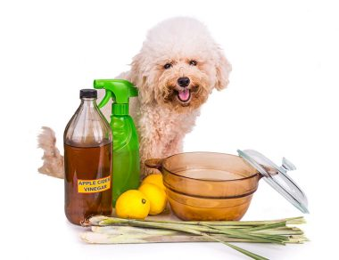 20 Amazing Ways to Use Apple Cider Vinegar for Dogs