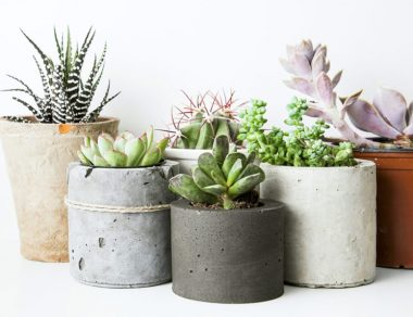 Stop Killing Your Succulents! 9 Tips for Keeping Your Indoor Plants Alive