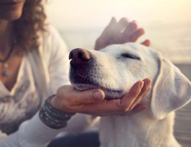 9 Signs Your Dog Has Leaky Gut & How To Heal It
