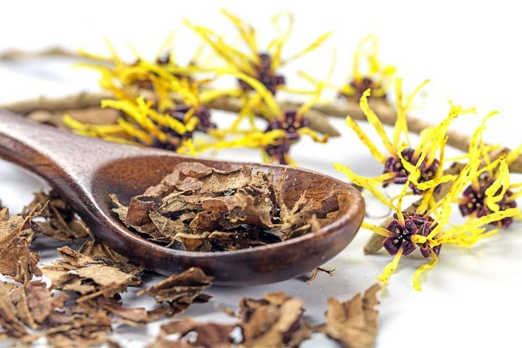 Witch-hazel-Hamamelis-and-wooden-spoon-with-dried-leaves-for-homemade-skin-care-cosmetics.jpg
