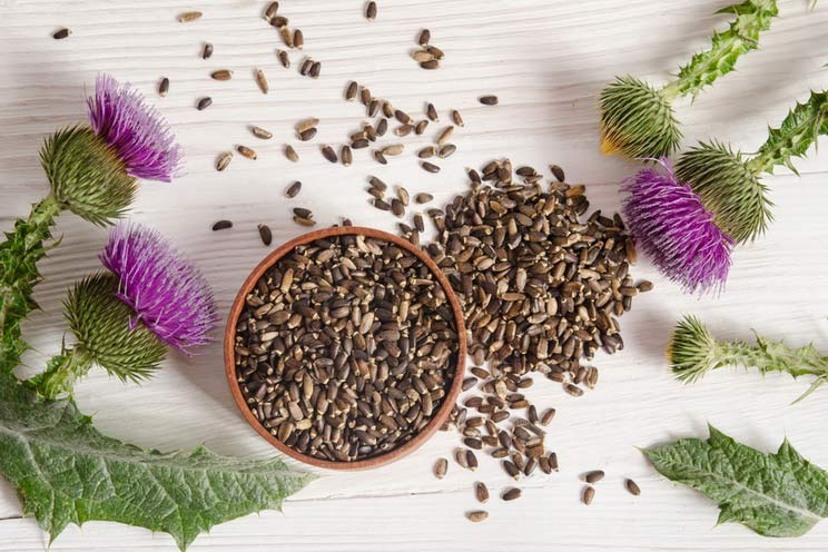 Seeds-of-a-milk-thistle-with-flower.jpg