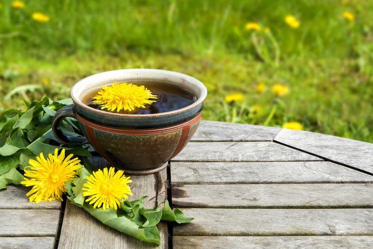 Tea-from-dandelion.jpg